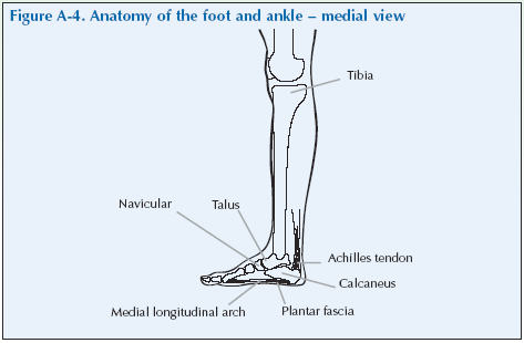 The Foot Ankle Global Alliance For Musculoskeletal Health