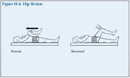 H-8 Hip flexion