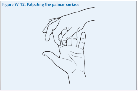 W-12 Palpating the palmar surface