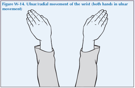 W-14 Ulnar radial movement of the wrist