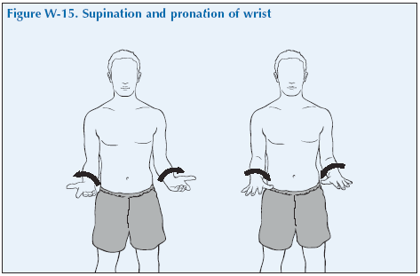 W-15 Supination and pronation of wrist