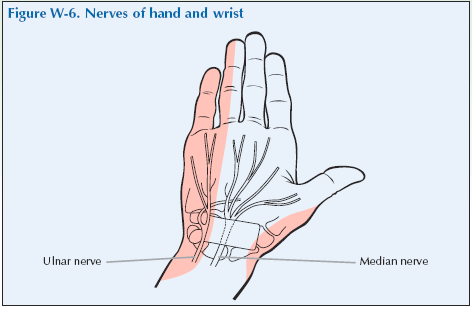 W-6 Nerves of hand and wrist