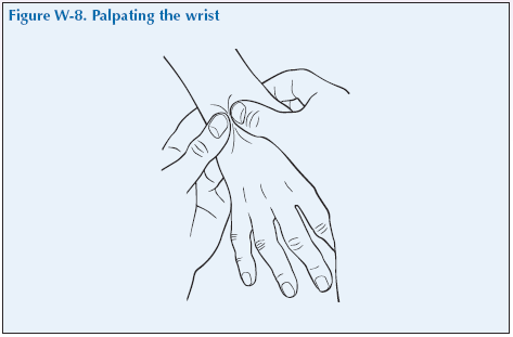W-8 Palpating the wrist