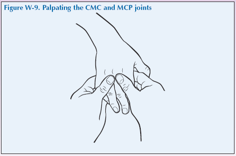 W-9 Palpating the CMC and MCP joints